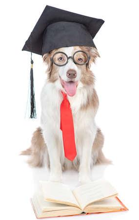 毕业的狗穿眼镜读一本书。隔绝在白色背景。