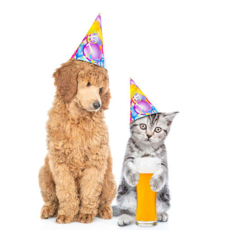 Cat and dog wearing party hats. Poodle dog looks at kitten who holds glass of the beer. isolated on white background. Banque d'images