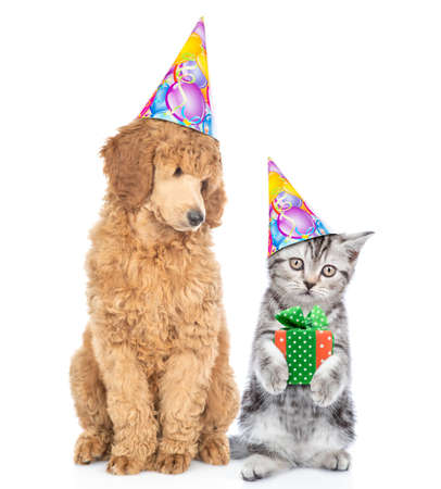 Dog and kitten wearing birthday`s hats. Cat holds gift box. Isolated on white background.