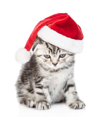 Tabby kitten with red christmas hat looking at camera. isolated on white background.