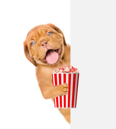 Happy puppy with bucket of popcorn looks from behind empty white banner. isolated on white background.