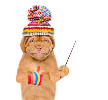 Smiling puppy wearing a warm hat points away on empty space and shows thumbs up gesture. isolated on white background.
