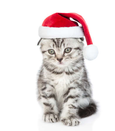 Cute tabby kitten wearing a red christmas hat sits in front view. isolated on white background.