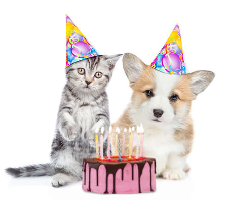 Kitten and corgi puppy wearing party's hats sit with birthday cake with many burning candles. isolated on white background. Banco de Imagens