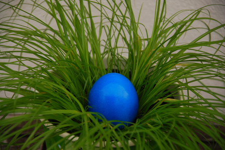 Blue egg in the grass Standard-Bild