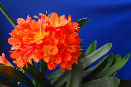 Plant in blossom Standard-Bild