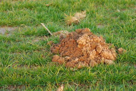 mole: Erdhaufen a mole