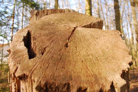 Totbaum deadwood