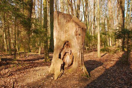 deadwood: deadwood tree