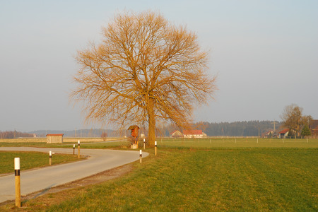the distance: Linde in the distance
