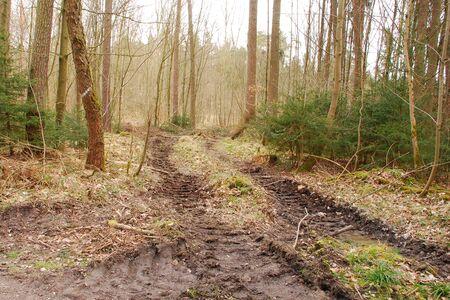 Harvester tracks in the woods