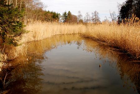flatly: Reeds on Hartsee Stock Photo