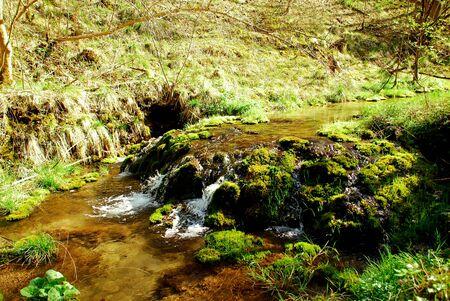 wild creek in Bavaria