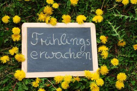 Slate labeled Fruehlingserwachen