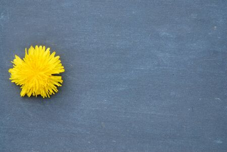 leer: Empty blackboard with blossoms