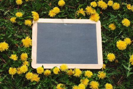 leer: Blackboard blank lying in the grass with flowers