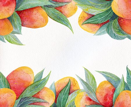 Colorful background with watercolor fruits frame.Background for packaging, cards and posters.Watercolor mango fruit and leaves closeup isolated on white background.Hand painting on paper.