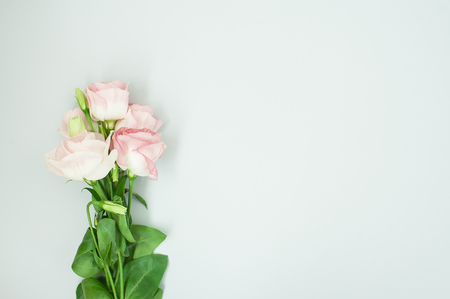 Flowers composition. Pink rose flowers on pastel blue background. Flat lay, top view, copy space