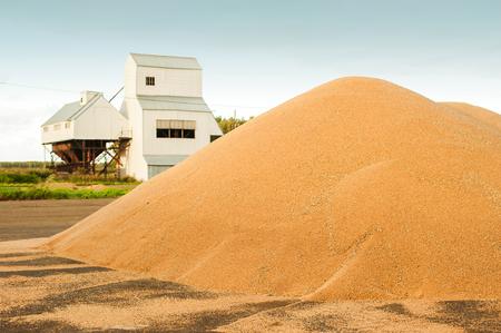 Grain storage silos. Harvest concepthill of grain, wheat, rye, barley, corn, rape, etc. Granary with mechanical equipment for receiving, cleaning, drying, grain shipment Stok Fotoğraf