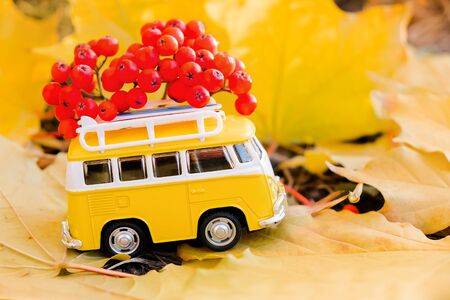 Autumn retro yellow van bus with with rowan berries on autumn maple leaf background. Funny retro toy car with surfboard. Autumn travel and vacation concept.