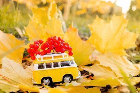 Autumn retro yellow van bus with with rowan berries on autumn maple leaf background. Funny retro toy car