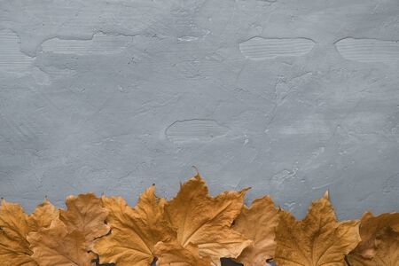 Autumn composition. Frame made of colorful marple leaves on dark concrete background