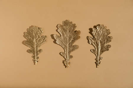 Shiny Golden oak leaves in a row on nude color background. Flat lay, top view minimal autumn composition concept. in a row 版權商用圖片