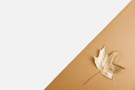Autumn season abstract background. Fall golden leave on nude and white background. Thanksgiving Day. Seasonal fall sale, Black Friday. Discount minimal concept. Flat lay, copy space