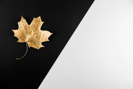 Autumn season abstract background. Fall golden leave on black and white background. Thanksgiving Day. Seasonal fall sale, Black Friday. Discount minimal concept. Flat lay, copy space 版權商用圖片