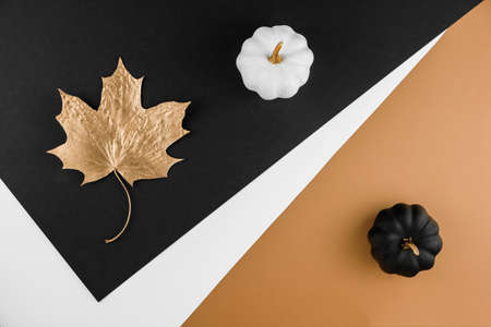 Autumn season abstract background. Fall golden leave and pumpkins on black and white background. Thanksgiving day, seasonal concept. Copy space. 版權商用圖片