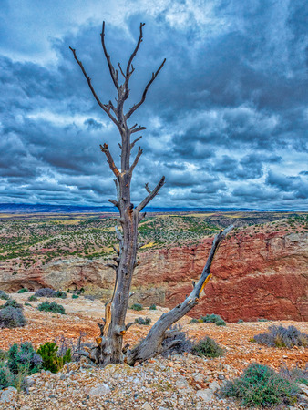 A forlorn tree on the top of the Bighorn Canyon in Montana - given some HDR love to make it feel better..!