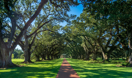 A lovely row of old oak trees in Mississippi Stock fotó