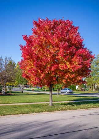 Autumn color in the midwest