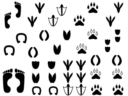 Set of human and animals traces illustrated on white background Illustration