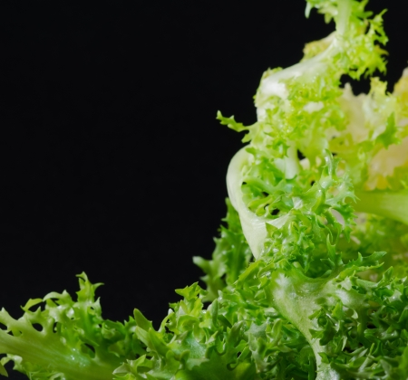 endivia: Variedades de escarola para ensaladas