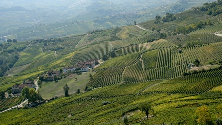 nebbiolo: Vineyards in the Langhe Stock Photo