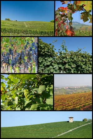 The Langhe Piedmont Stock Photo - 13999673