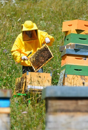 Beekeeper at work photo