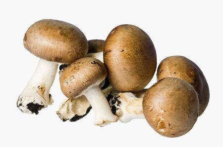 champignons: Champignons cream