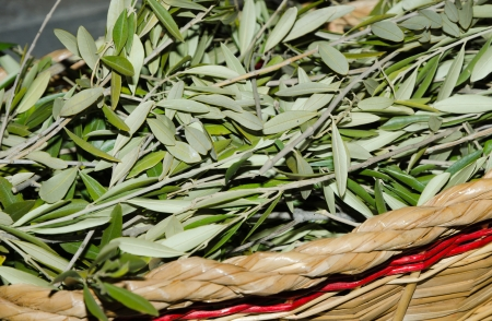 palm sunday: Easter olive branches