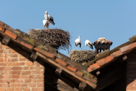 Storks  nests on the roofs photo