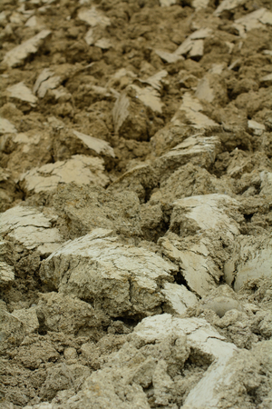 plowed: Clods in the plowed field