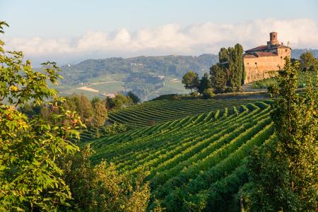 nebbiolo: The Langhe near Barolo - Piedmont - Italy