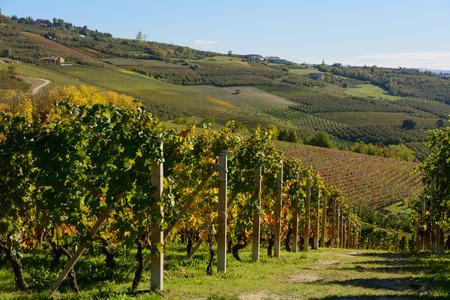piedmont: Vineyards of Langhe in Piedmont - Italy Stock Photo