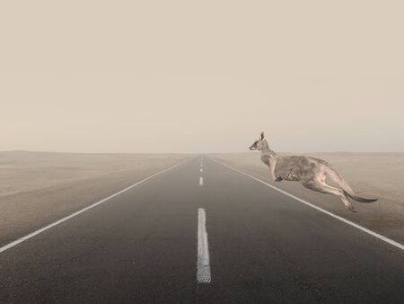 Kangaroo animal jumping through an empty road Reklamní fotografie