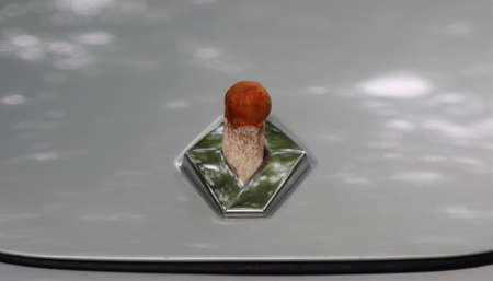 Boletus mushroom grown on the hood of a car. Kaliningrad region, Russia. Photographed on July 11, 2020. Redakční