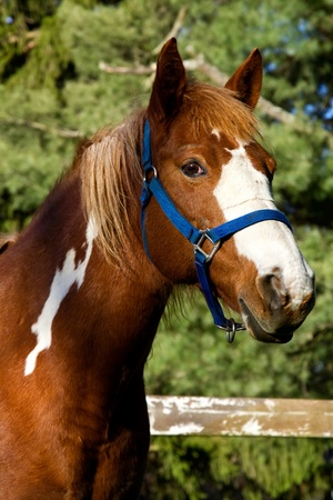 Portrait of a horse standing in a field. 免版税图像