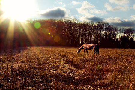 Landscape shot of a horse grazing at sunset
