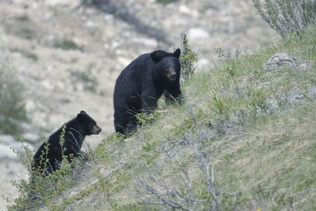 Shot in Jasper National Park, Alberta Stock Photo