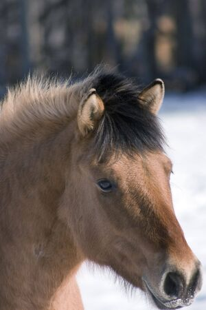 Friendly young horse shoot while on a winter drive. Stock Photo